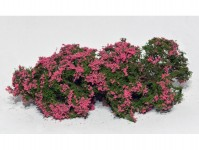 Model Scene 701-93S kvetoucí keře růžové