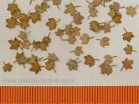 Model Scene l4-101 stromové listí javor - extra barvy, podzim 60ks 1:48