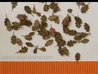 Model Scene l8-102 stromové listí dub - extra barvy, podzim 2000ks 1:72