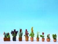 okrasné květiny v truhlíku