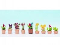 Noch 14080 okrasné rostliny v květináčích