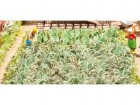 Noch 14107 sada zeleninová zahrada