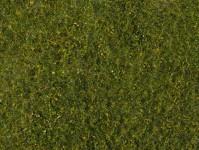 foliáž středně zelená louka