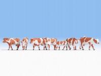 Noch 15726 krávy hnědobílé
