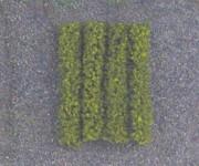 Jordan 12f živý plot zelený H0 dl.10cm 4ks H0/TT