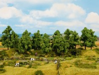 Noch 24600 listnaté stromy