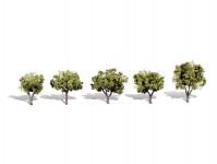 světle zelené listnaté stromy malé 5 ks
